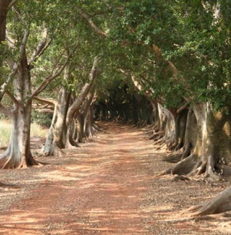 Campos do Conde Horto Florestal